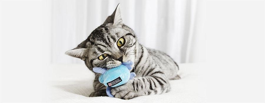 gatto giocattolo interattivo
